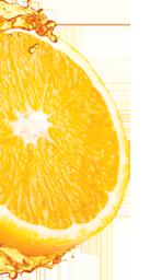 Orange Flyer Distribution Logo in Half